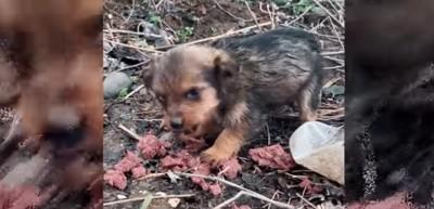エサを食べている子犬