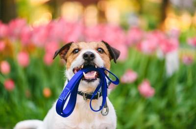野外でリードをくわえる犬