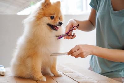 トリミングサロンの犬