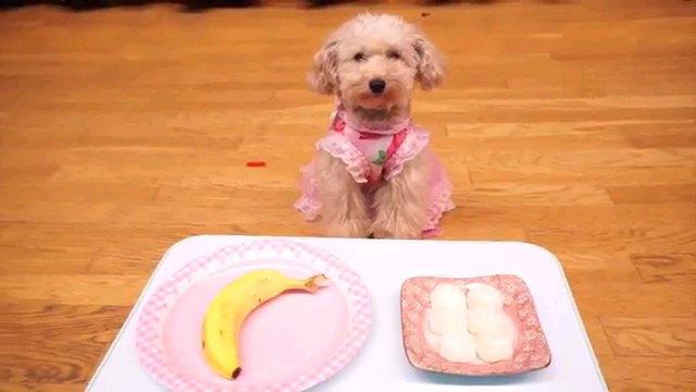 犬とバナナときび団子