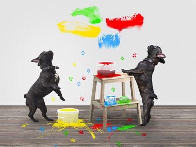 ペンキまみれになった壁と犬
