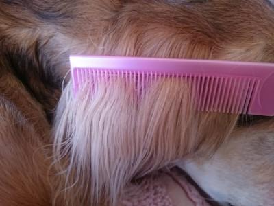 被毛を梳かすピンクのコーム