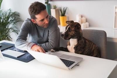 ホームオフィスに座る犬と男性