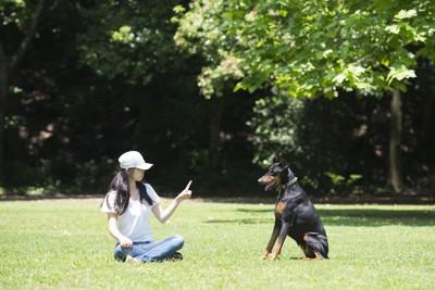 座って指示を出す女性と犬
