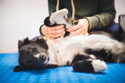 横になった犬の前足を触っている飼い主
