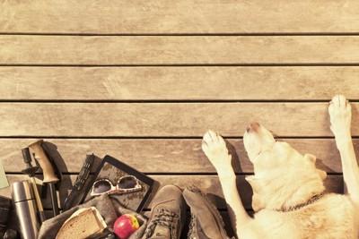 様々なモノを集めている犬