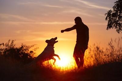 夕日に照らされる犬と飼い主
