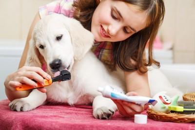 優しく歯磨きされる犬