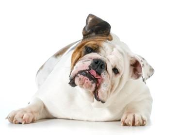 疑問符と犬