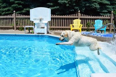 飛び込む犬