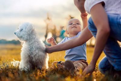 親子と横を向く白い犬