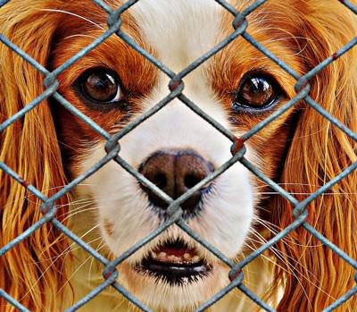 金網の中の犬1