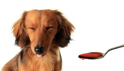 スプーンで差し出されたものを嫌がっている犬