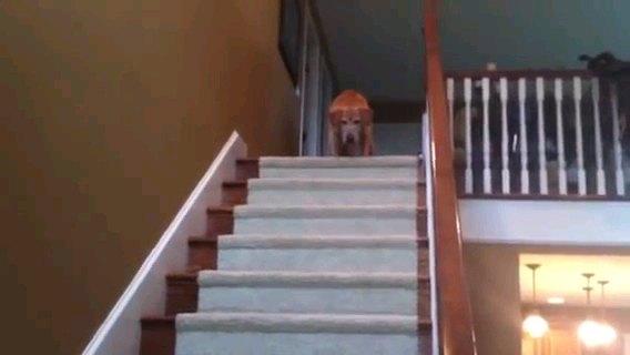 階段の下をみる
