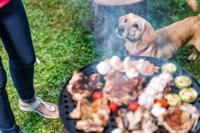 飼い主と一緒にバーベキューに参加する犬