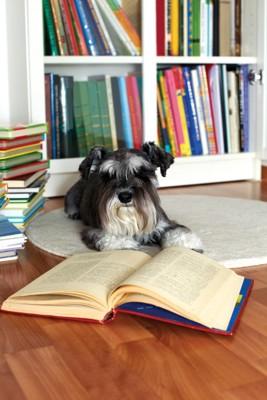 本にまみれた犬