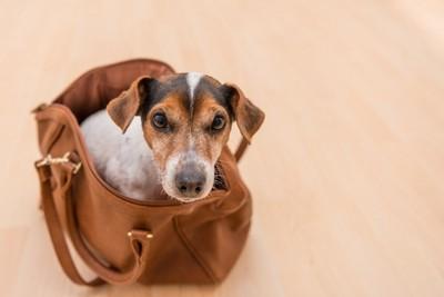 バッグに入った犬