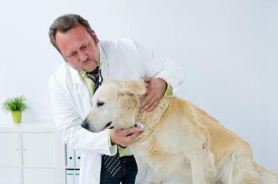犬の首に聴診器