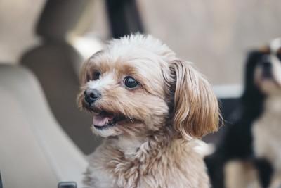 笑顔で横を見る犬