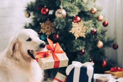 プレゼントをくわえる子犬
