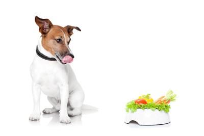 野菜が入ったフードボウルを見ている犬