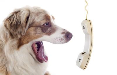 口を大きく開けたシェパードと受話器