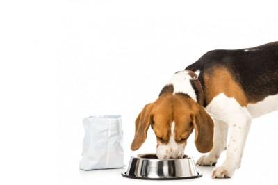 食事をする犬
