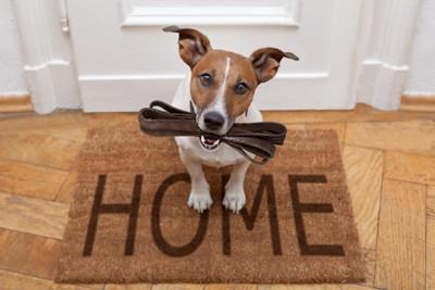 HOMEのマットの上に座る犬