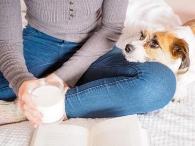 膝に顎を乗せる犬