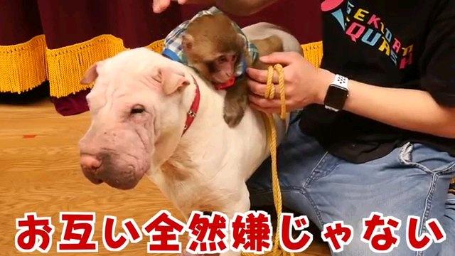 お互い全然~字幕