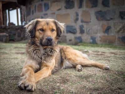 野外で前足クロスしている犬