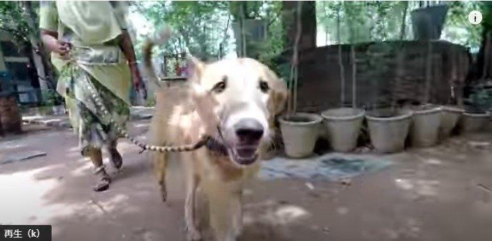 回復する犬