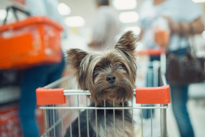 ショッピングカートに乗る犬