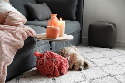 焚かれたキャンドルと下に犬