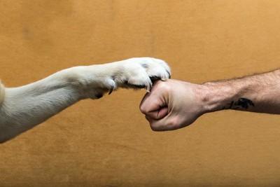 人の拳の上に置かれた犬の前足