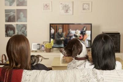ソファーでテレビを見る女性と犬