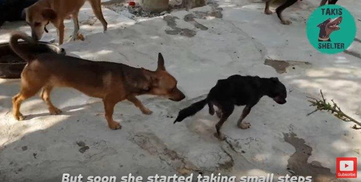 歩き出した犬