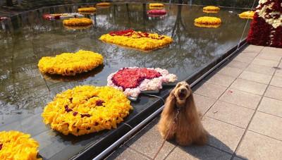 水辺に浮かんだ花と犬