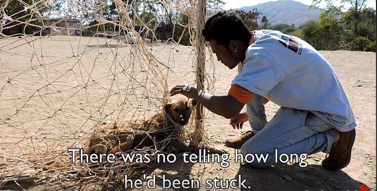 ネットにからまった犬と救助隊員