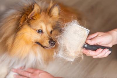 ブラッシングの抜け毛と犬