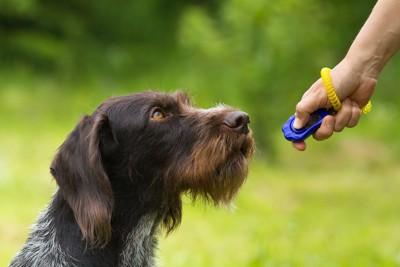 犬とクリッカーを持つ飼い主の手