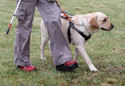 盲導犬とユーザー