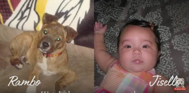 子犬と乳児