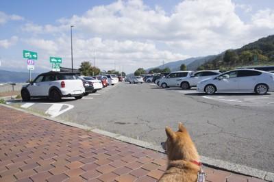 車を見る犬