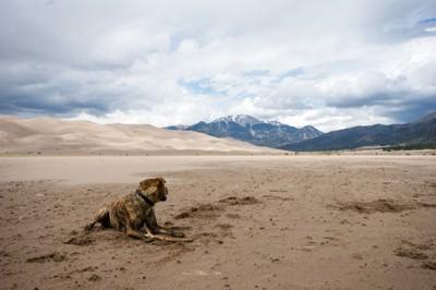 砂漠で座ってるプロットハウンド
