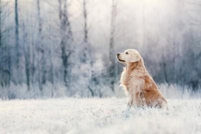 雪の中で凛々しい犬