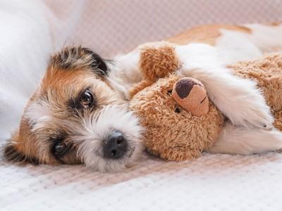 ぬいぐるみを抱いている犬