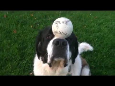 ボール乗せる