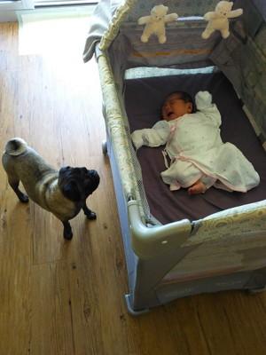 ウメと新生児