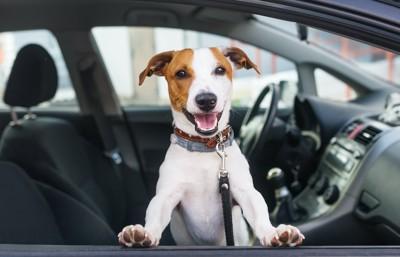 車から顔をだすリードをつけた犬